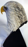 Bald Eagle Head 5