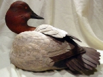 canvasback2
