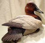 canvasback7