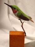 perchedhummingbird2
