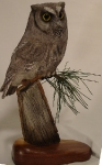 screech-owl-on-pine