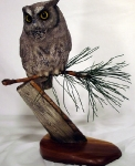 screech-owl-on-pine1