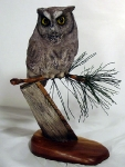 screech-owl-on-pine2