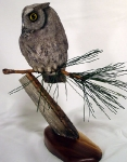 screech-owl-on-pine5